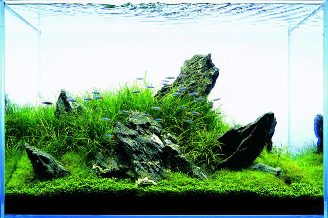 Let´s start with Q: Layoutvariations by ADA - Aquascaping ...