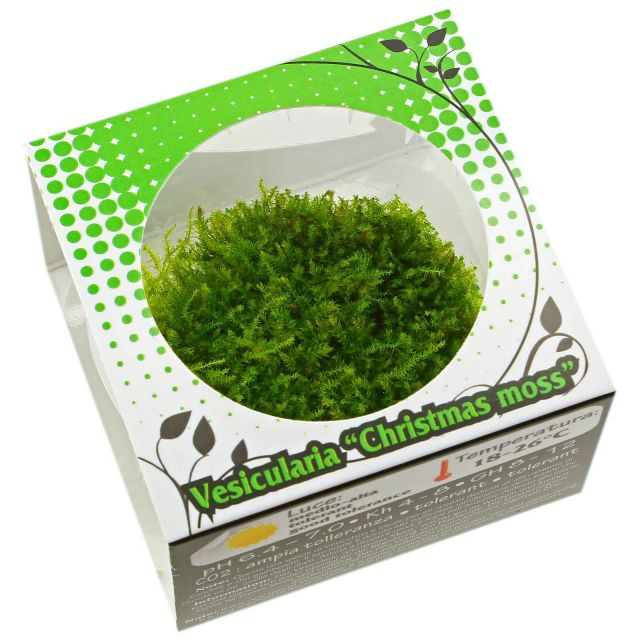 "Vesicularia ""Christmas Moss"" - in Vitro XL"