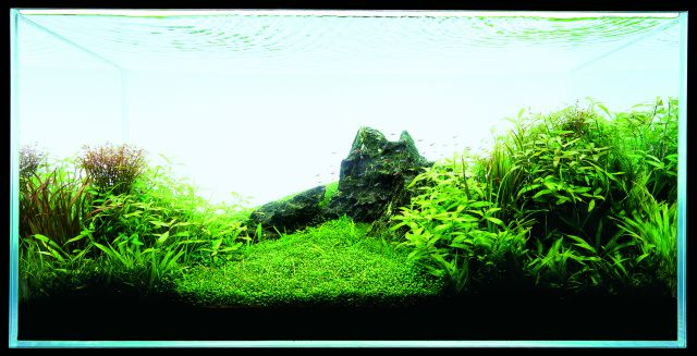 ADA - Nature Aquarium Suikei Gallery 3 tank 4