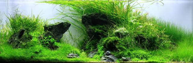 Aquascape U Form