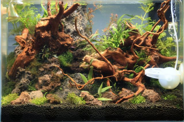 algen im aquarium aquascaping wiki aquasabi aquaristik shop. Black Bedroom Furniture Sets. Home Design Ideas