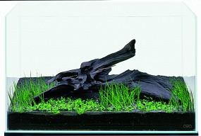 ADA Vordergrund pflanzen