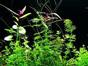 ADA Pflanzenwachstum mit Co2