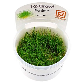 Eleocharis sp. 'Mini' - 1-2-GROW!