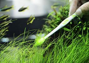 Zahnbürste Alge