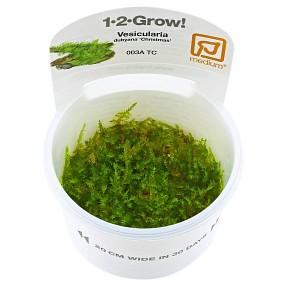 "Vesicularia ""Christmas Moss"" - 1-2-GROW!"