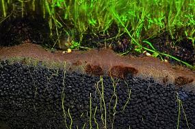 Substrat Mulm