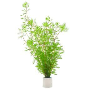 Myriophyllum spicatum - Bund