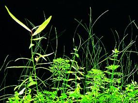 ADA Pflanzenwachstum ohne Co2