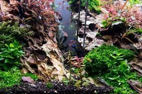 Stängelpflanze und Kopfsteckling
