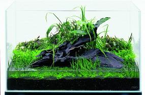 ADA Hintergrund bepflanzen