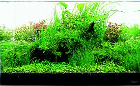Prävention gegen Algen