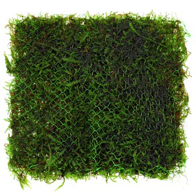 Moss on a stainless steel pad