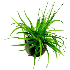 Aquasabi Plant Pod