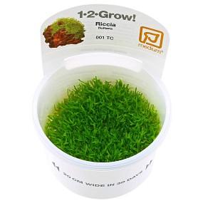 Riccia fluitans - 1-2-GROW!