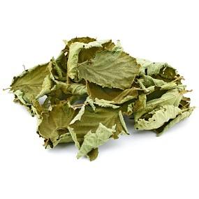 Haselnussblätter - Grün