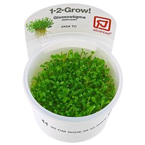 Glossostigma elatinoides - 1-2-GROW!