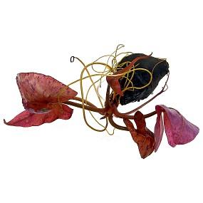 Nymphaea lotus - Einzelpflanze