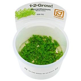 "Micranthemum sp. ""Montecarlo-3"" - 1-2-GROW!"