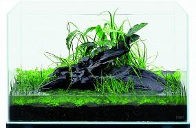 ADA Epiphytische Pflanzen pflanzen