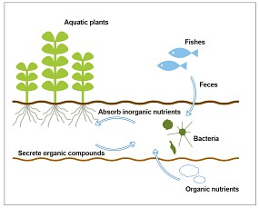 Let S Start With A Substrate Aquascaping Wiki Aquasabi