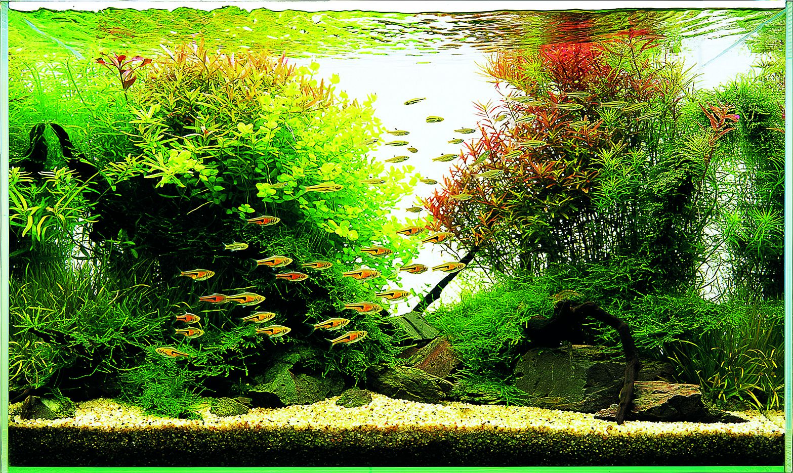 Let S Start With A W60 Aquascaping Wiki Aquasabi