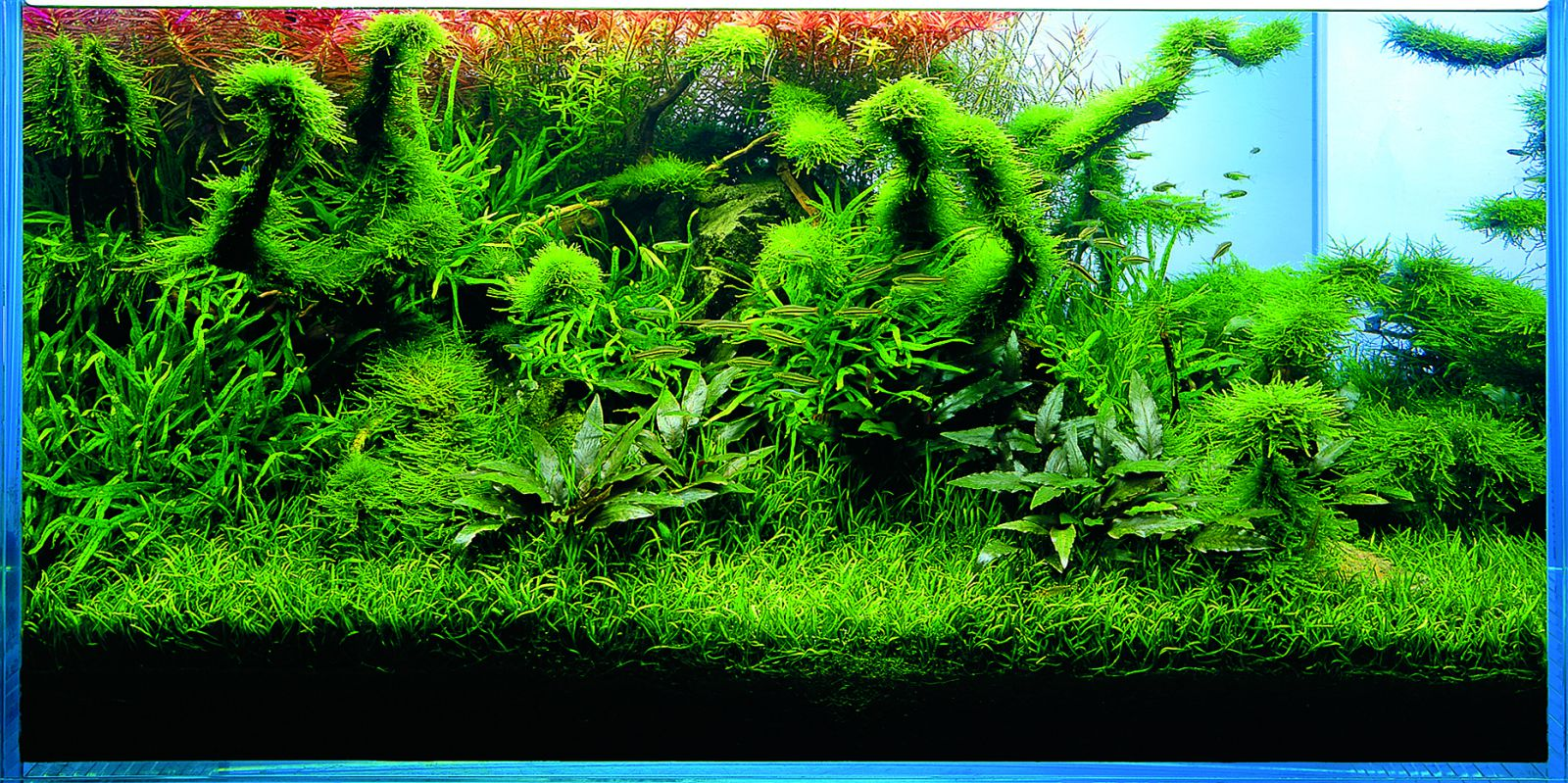 Let S Start With A W90 Aquascaping Wiki Aquasabi
