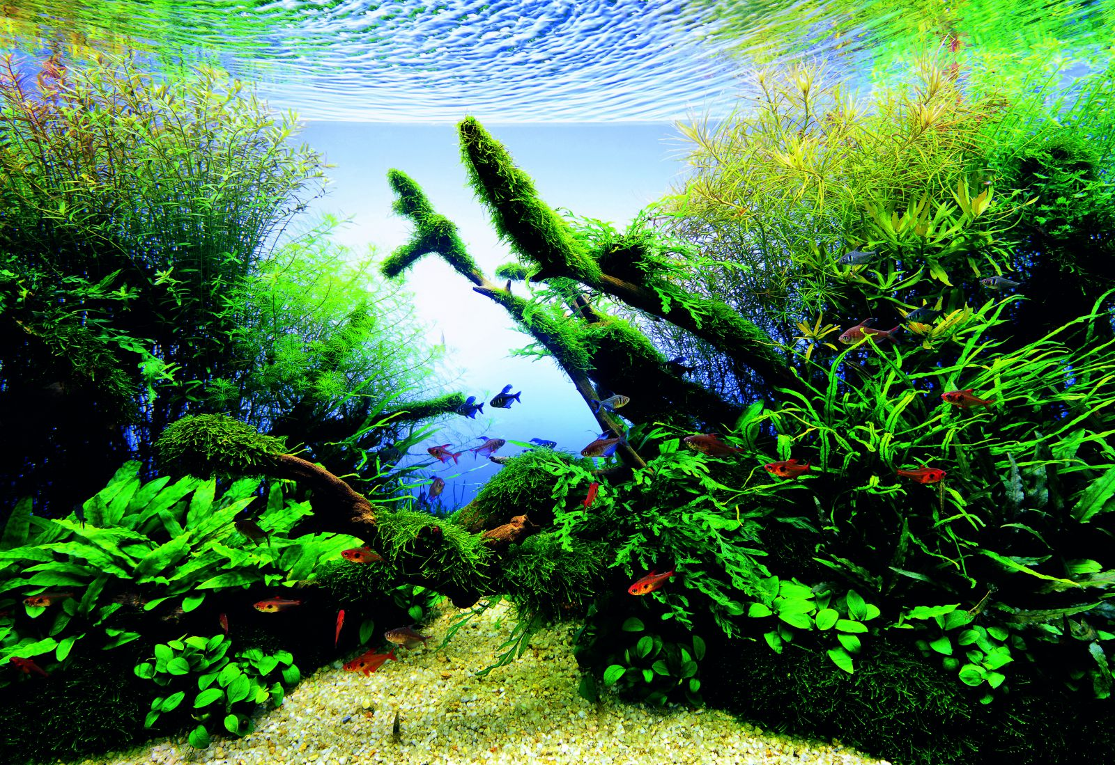 let s start with a lighting aquascaping wiki aquasabi