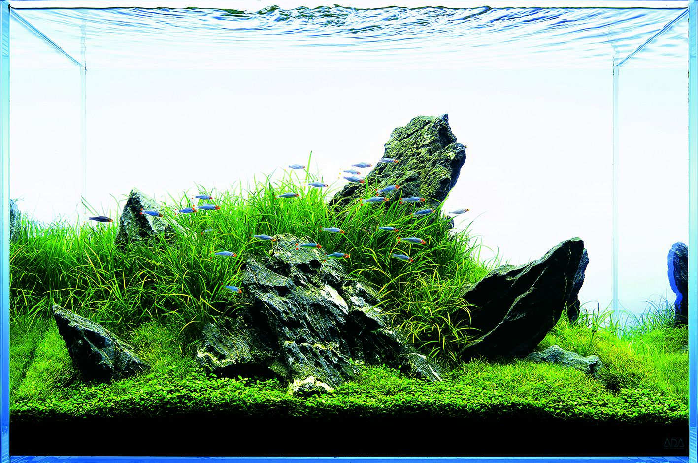 Let S Start With A Hardscape Materials Aquascaping Wiki Aquasabi